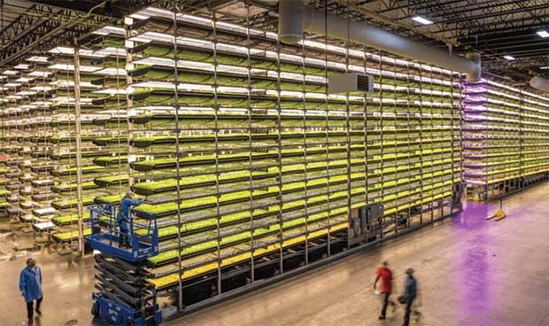 AeroFarms Vertical Farming